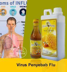 Virus Penyebab Flu